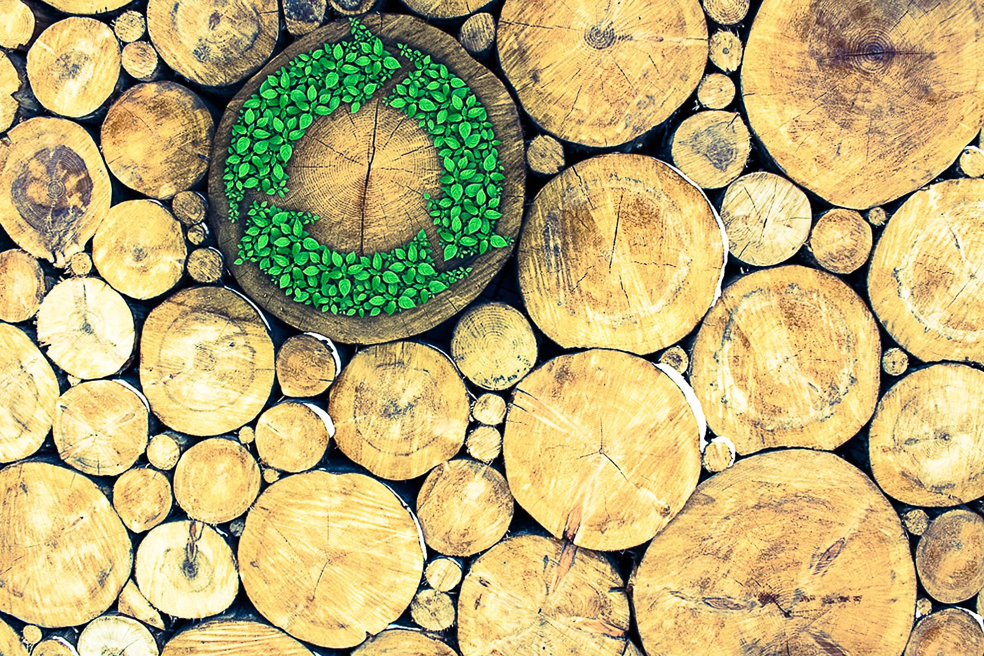 Il legno